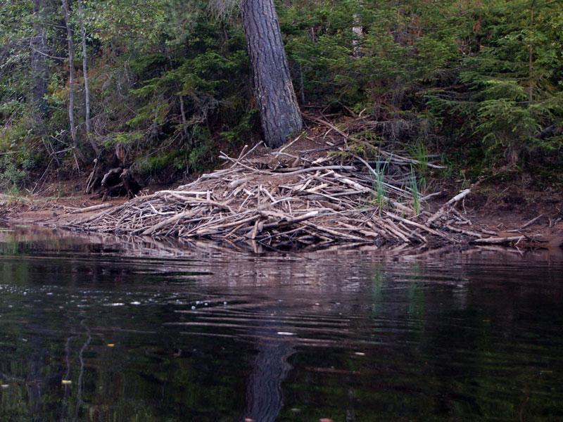 A beaver lodge.