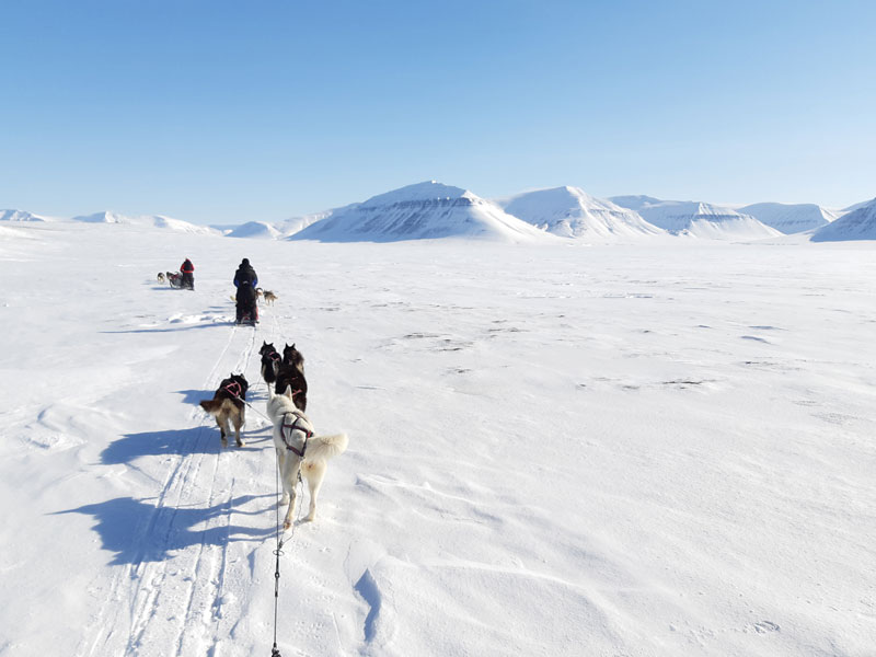 Arctic Wilderness Dog Sledding in Svalbard (Norway) in late April/early May.