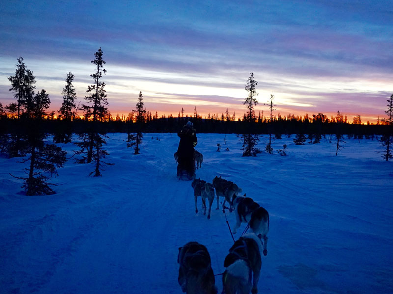 Discover Dog Sledding in Lapland (Sweden) in late December