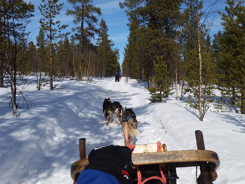 Discover Dog Sledding in Lapland (Sweden) in early April