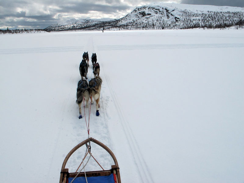 Dog Sledding and Northern Lights in Vindelfjällen (Sweden) in mid-April