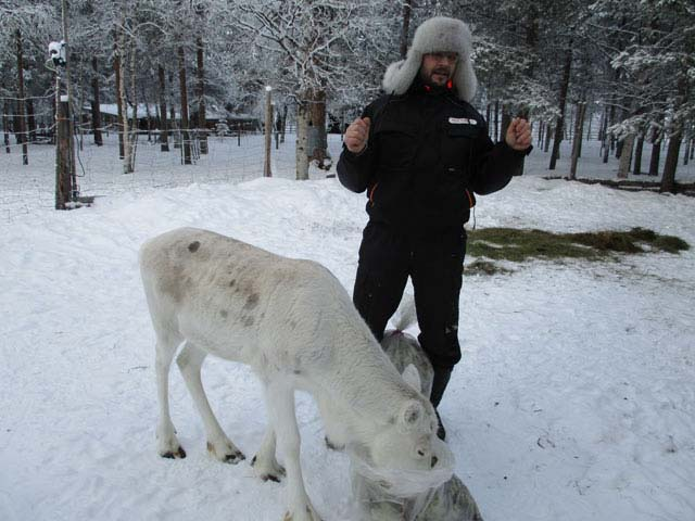 Reindeer are a central part of daily life for many Finns.