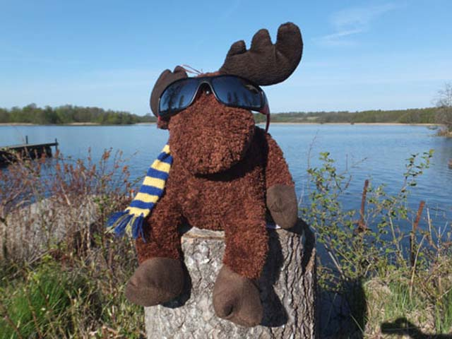Have moose, will paddle.
