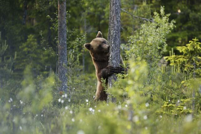 Photo: Håkan Vargas /imagebank.sweden.se