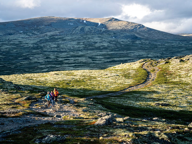 Running in Rondane, Norway. Photo: MON.
