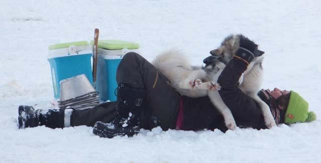 Hugging a husky.