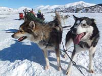 Dog Sledding on the King's Trail.