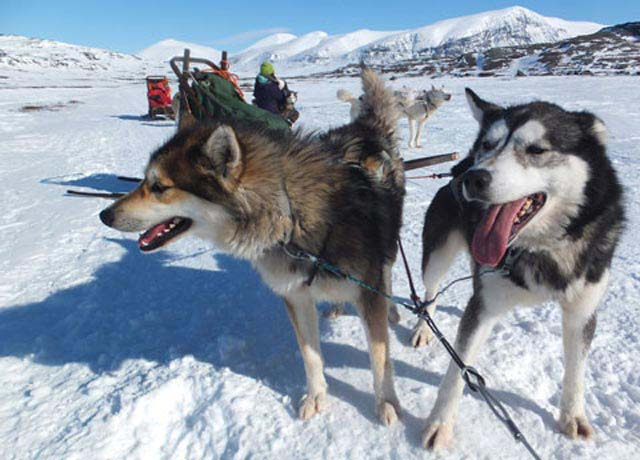 As with any dogsled trip, the dogs are what make it magical.