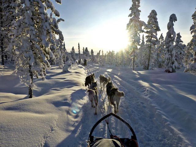 Keep tension in the lines so that the sled does not get too close to the wheel dogs.