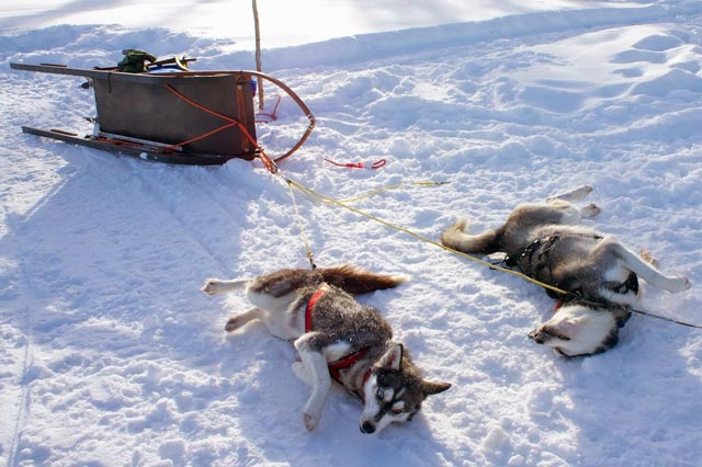 Sometimes, your guide may recommend that you tip the sled on its side so that it cannot be pulled away.
