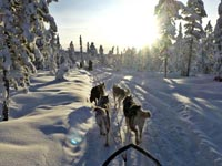 How to Drive a Dogsled.