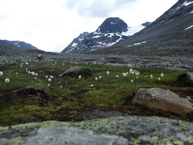 The Svartdalen valley is dotted with alpine flowers.