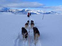 Dog sledding in the Norwegian mountains.