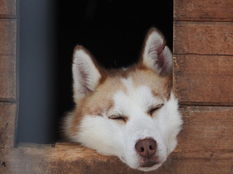 Top 20 Husky Pictures. Photo: Resy Van Beek.