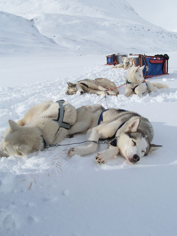 Top 20 Husky Pictures. Photo: Nature Travels