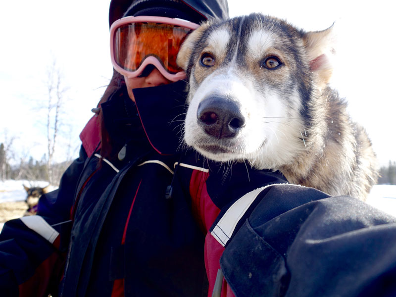 Top 20 Husky Pictures. Photo: Lydia Lam.
