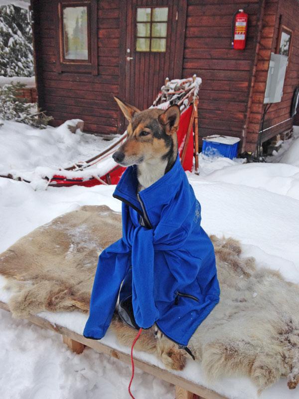 Top 20 Husky Pictures. Photo: Jo Hamilton.
