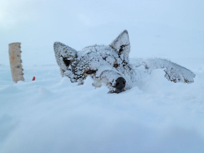 Top 20 Husky Pictures. Photo: Kayleigh MacMillan.