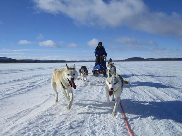 Northern Lights Dog Sledding in Lapland.
