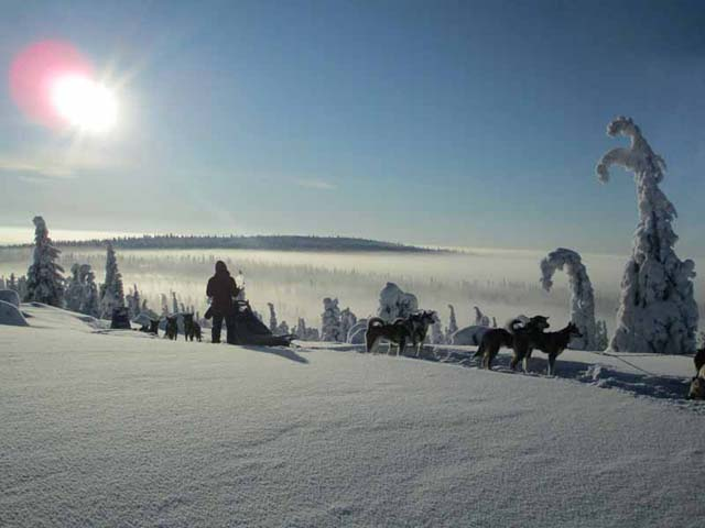 Dog Sledding and Northern Lights in Vindelfjällen.