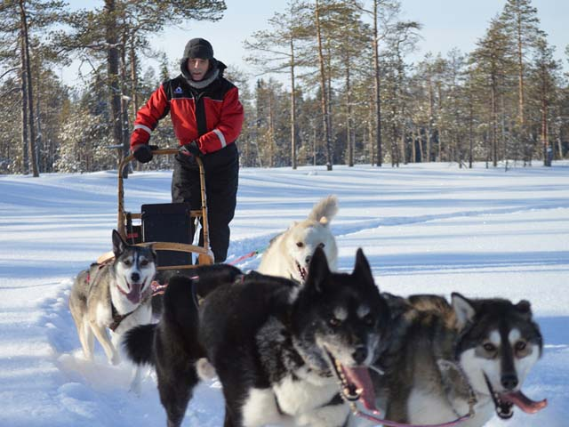 Private Dogsled Tours for Two in the Taiga Forest.