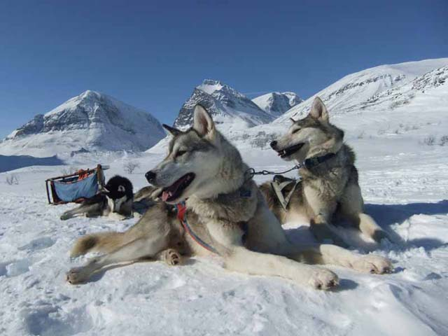 Husky Mountain Expedition in Lapland.