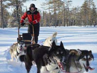 Guide to finding your ideal dogsled tour.