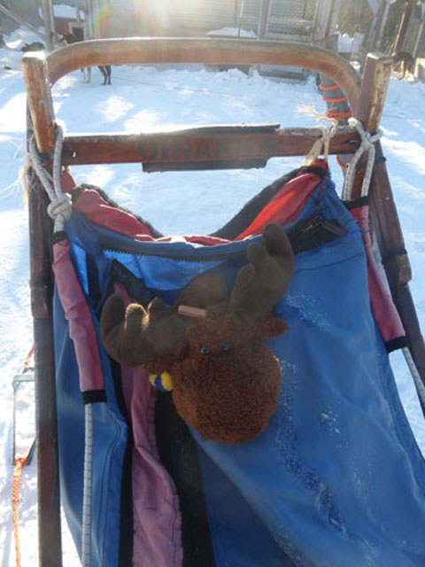 Elky prepares to go sledding!