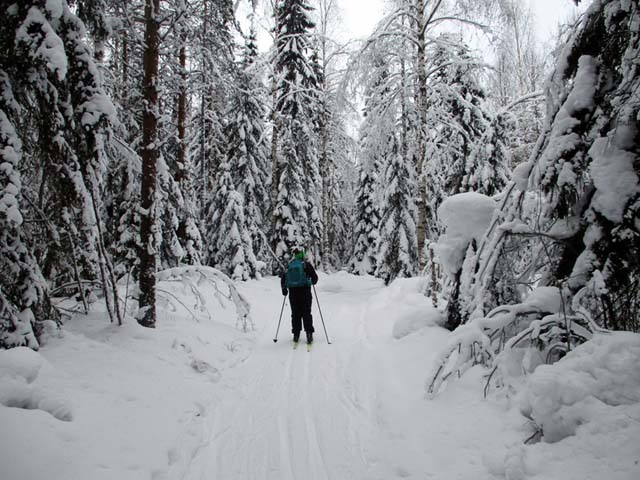 Skiing through the forest.