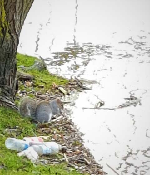 Plastic is unsightly and very harmful to animals, humans and the wider environment.