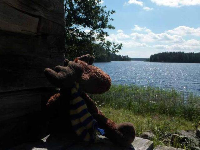 Elky enjoys the Finnish landscape.