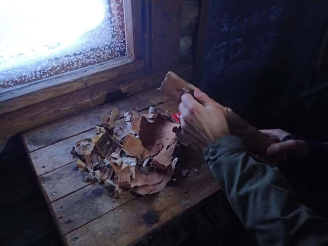 Birch bark makes a wonderful firelighter.