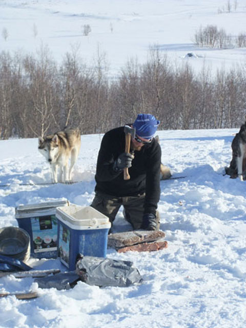 Preparing the frozen blocks of meat for the huskies.