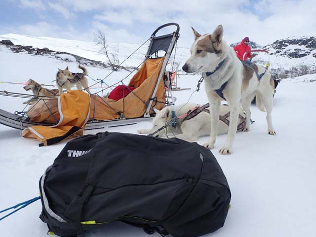 Any bones in there? The Thule Capstone 32l is eyed enviously but one of Sofia's huskies!