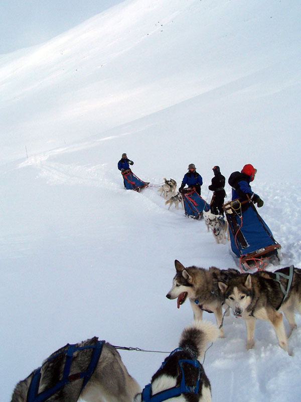 Deciding the snow's too deep to reach Hukejaure, we prepare for an about turn. Photo: Nature Travels.