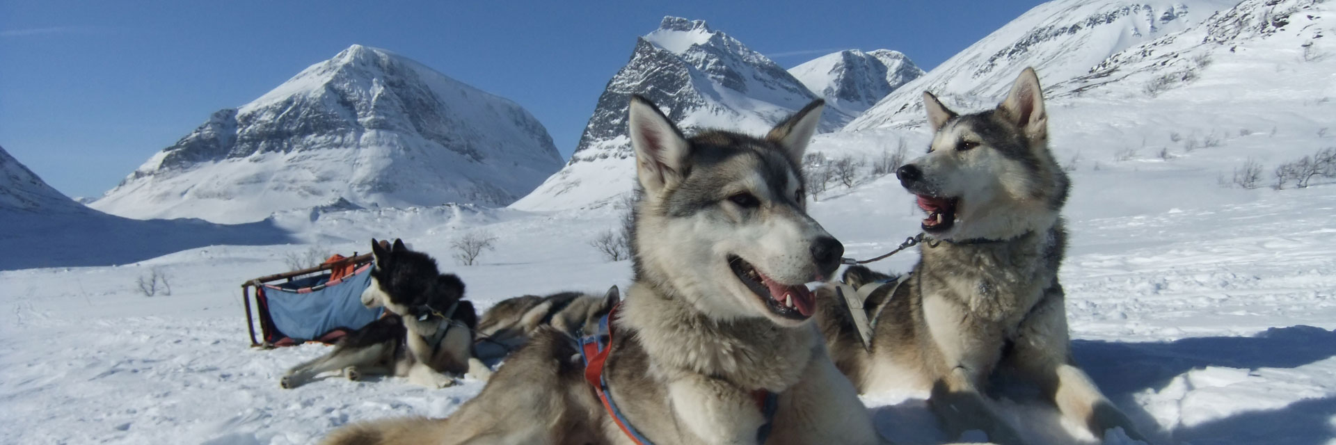 Dog Sledding Holidays