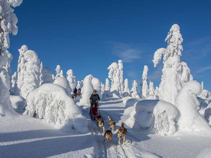 Polar Lights Husky Sledding in Finnish Lapland | Nature Travels