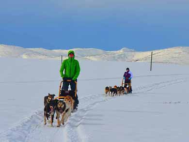 Go Dog Sledding in Trondelag