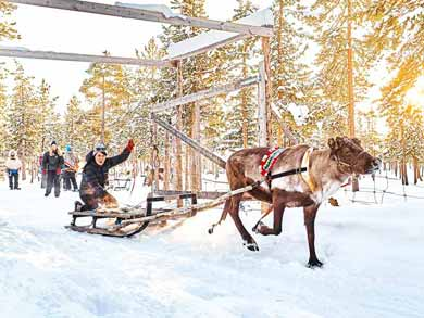 Reindeer Encounter and Sami Experience in Lapland