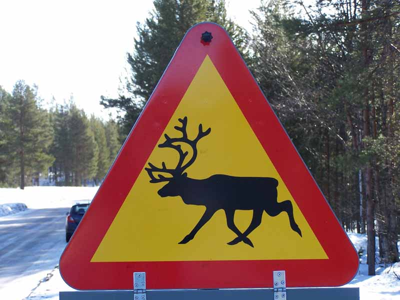 Moose sign while driving in Sweden