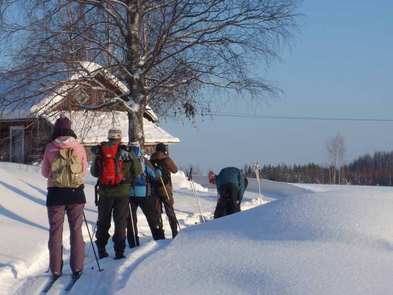 Cross Country Skiing in Eastern Finland