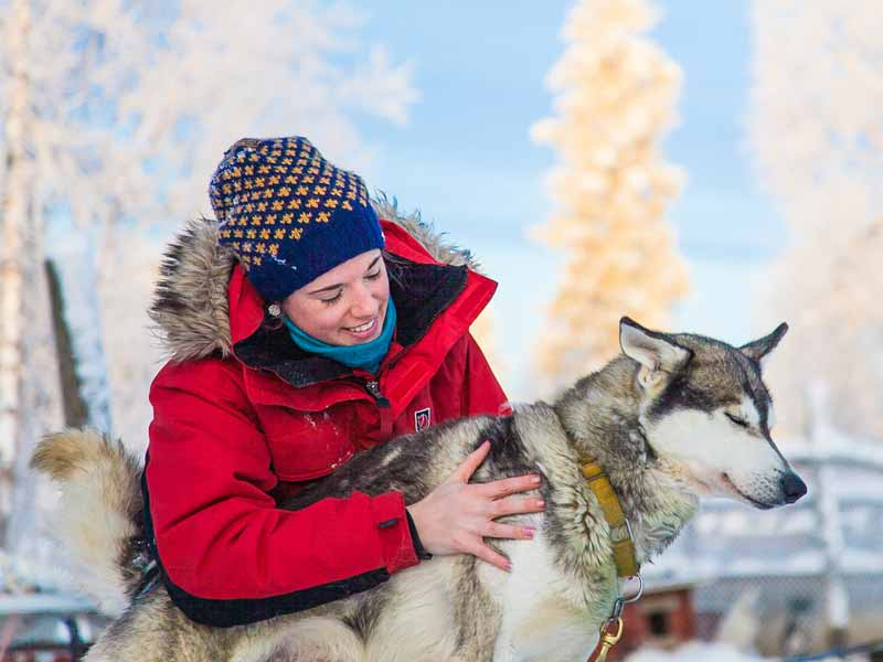 Caring for your dogsled team