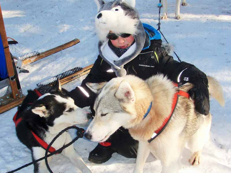 Discover Dog Sledding in Lapland