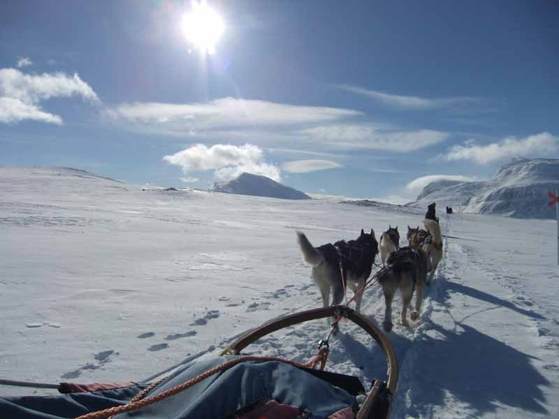 Husky Mountain Expedition in Lapland