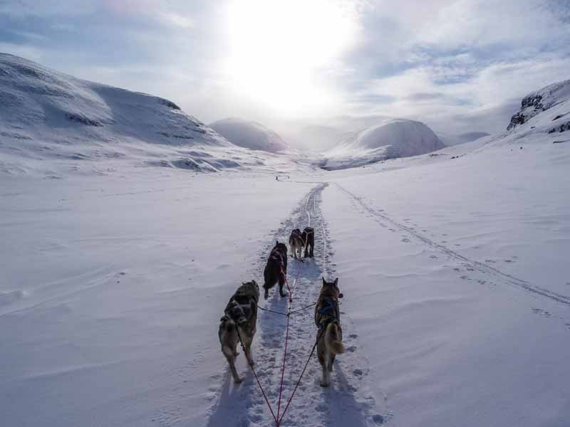Dog Sledding and Winter Camping on the King's Trail