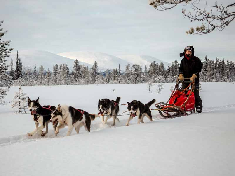 Drive your own dogsled