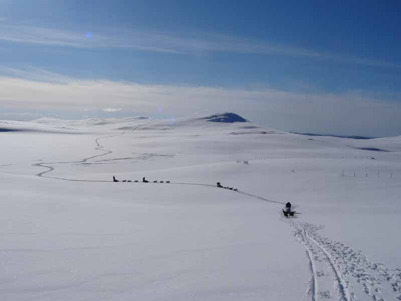 Wilderness dog sledding in western Lapland