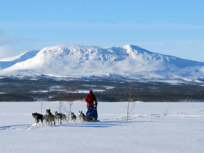 Wilderness Dogsled Adventure in Vindelfjallen